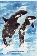 Watercolour killer whales poster